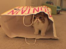 家有可爱猫咪