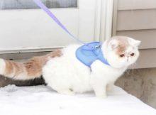 雪地里的包子脸猫