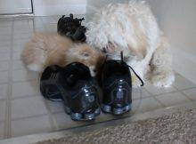 喜欢玩鞋子的猫咪和狗狗