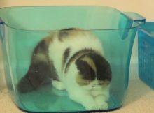 喜欢藏在容器里的猫咪