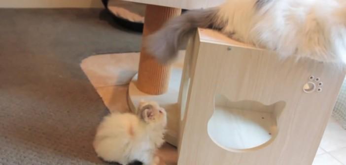爱抓尾巴的小猫咪