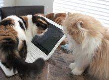 两只猫咪打起来了