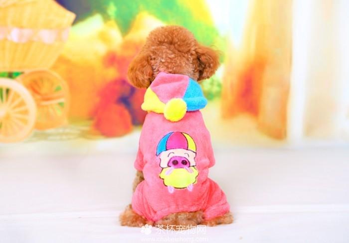 茶杯犬的衣服(四)