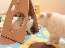 猫咪爱玩耍