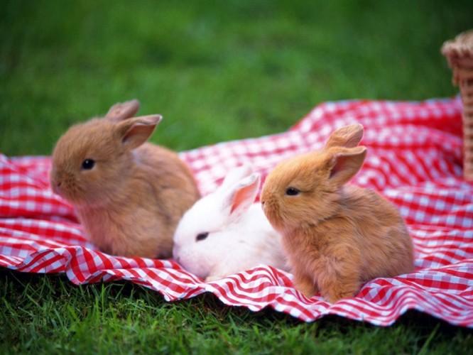 可爱的小兔子(二)