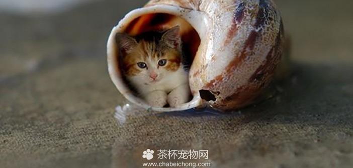 世界最可爱的茶杯猫
