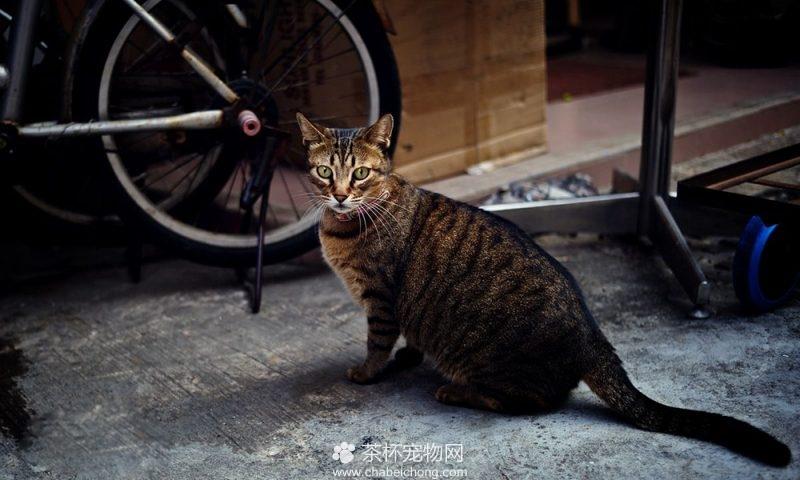 奥西猫图片(五)