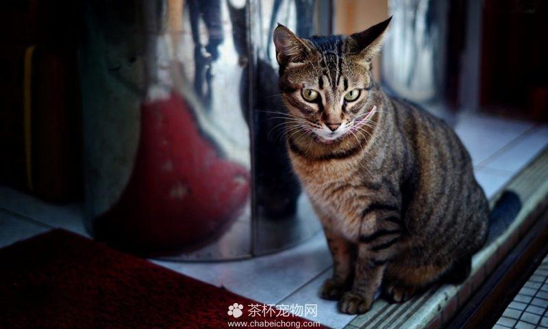 奥西猫图片(六)