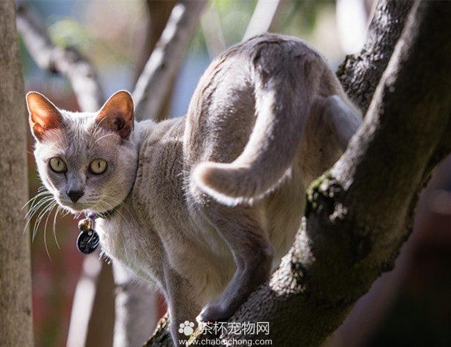 东奇尼猫图片(五)