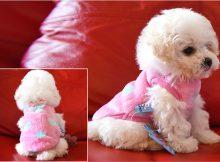 茶杯犬衣服品牌