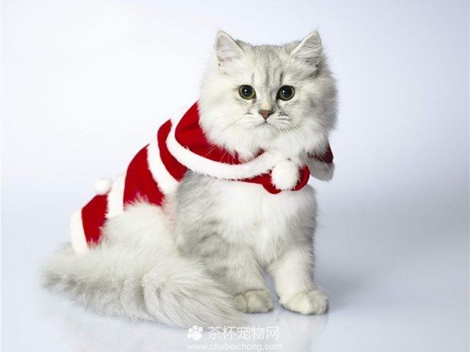 褴褛猫图片(二)