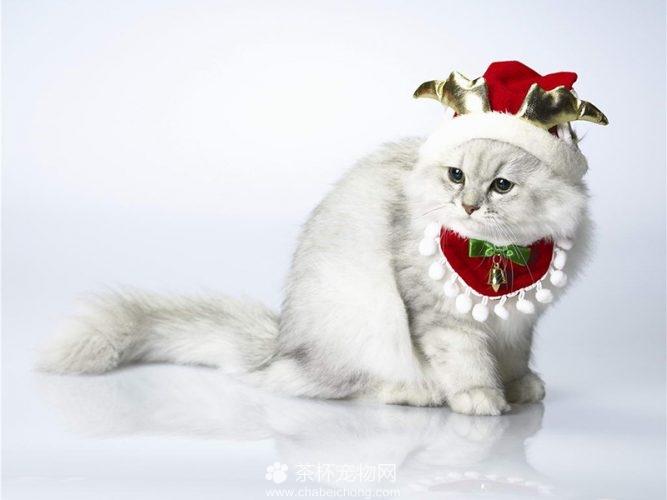 褴褛猫图片(三)