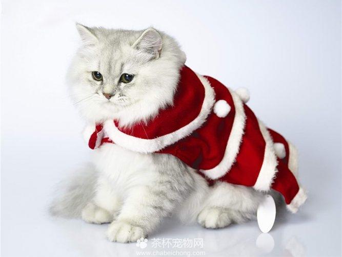 褴褛猫图片(四)