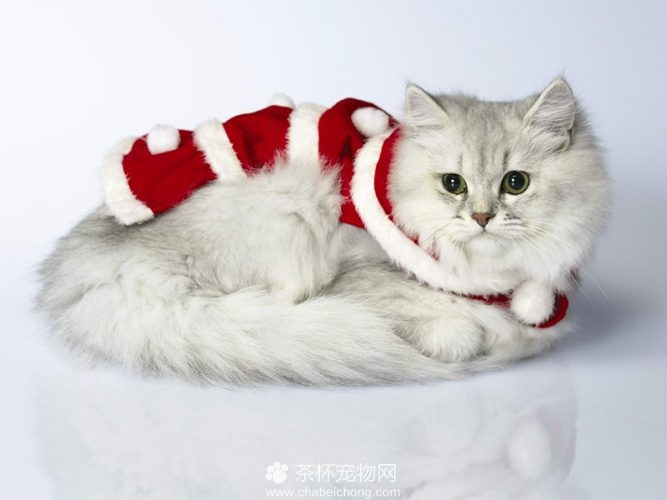 褴褛猫图片(五)