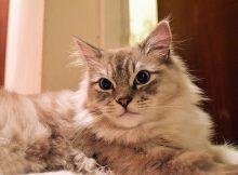 褴褛猫图片(六)
