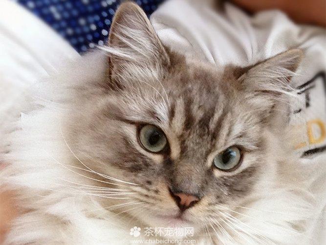 褴褛猫图片(八)