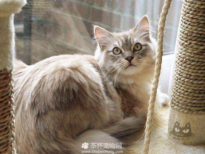 褴褛猫图片(九)