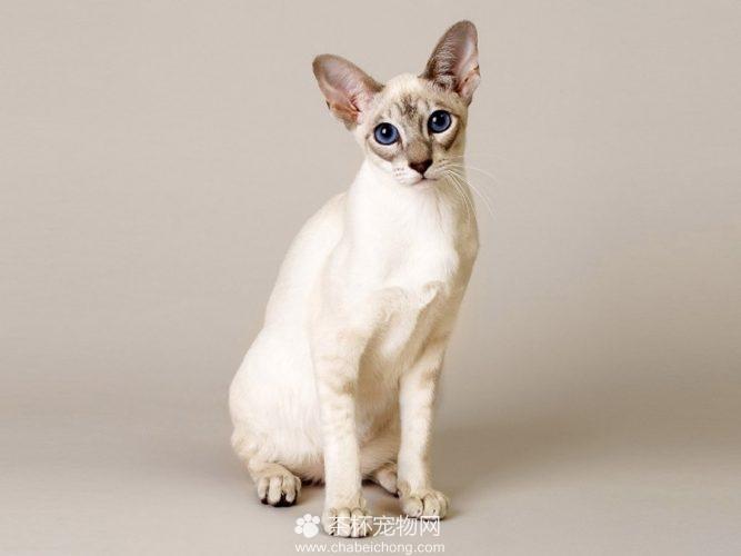 新加坡猫(二)