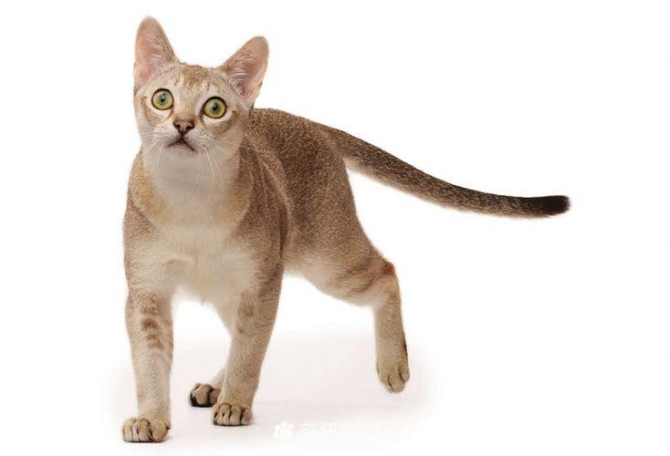 新加坡猫(三)