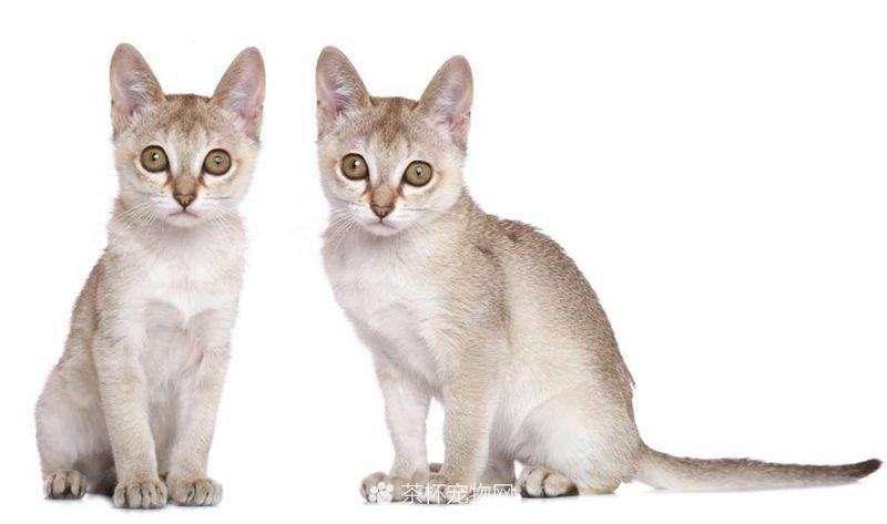 新加坡猫(五)