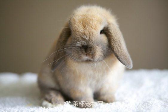 迷你兔(四)
