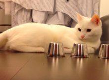 猫咪玩游戏