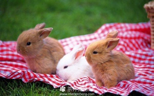 迷你兔图片大全(三)