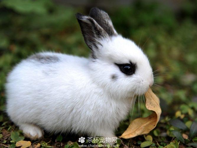 熊猫兔图片(三)