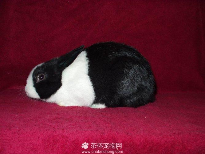 熊猫兔图片(五)
