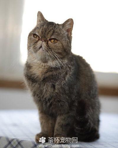 猫咪正常图片