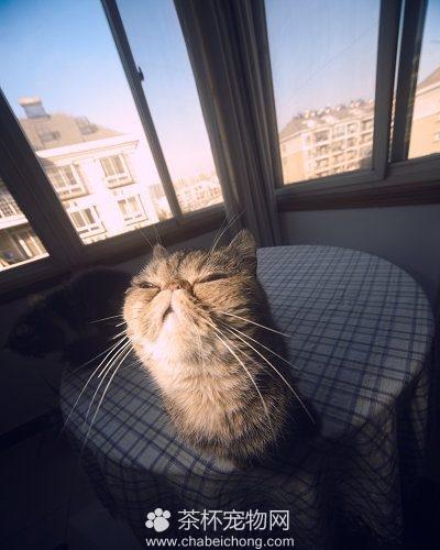 笔筒猫图片