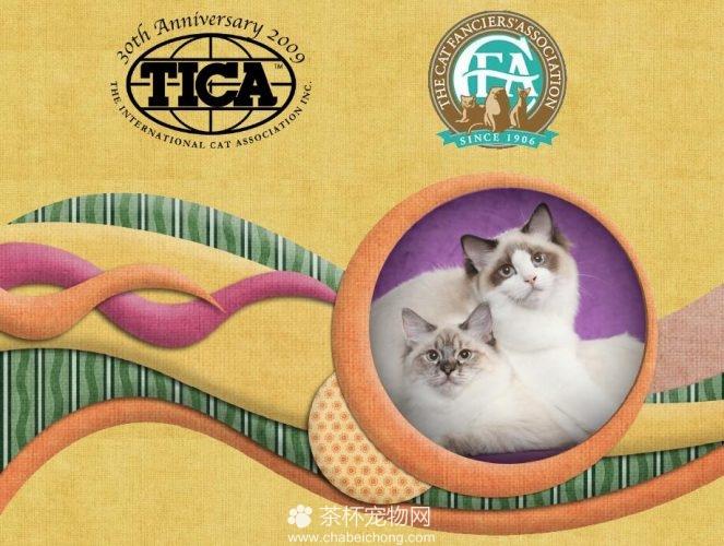 布偶猫的CFA和TICA认证