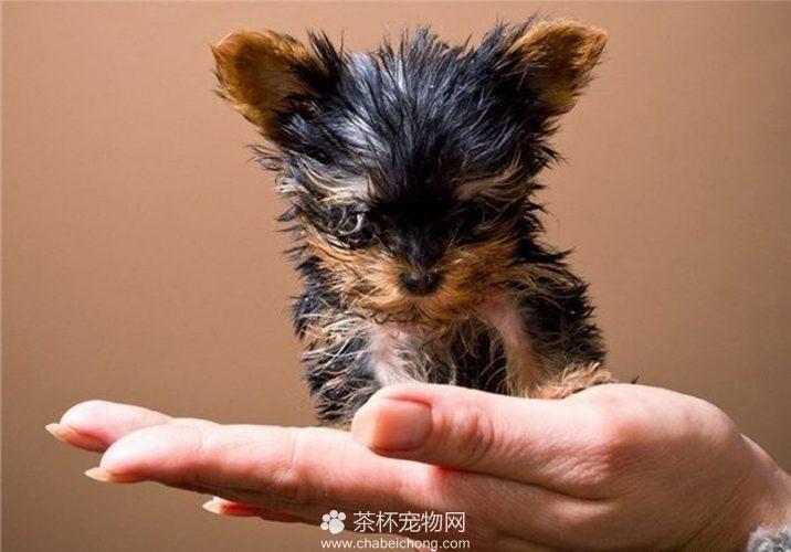 很小很小的狗狗