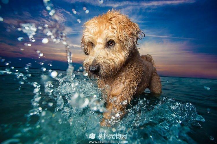 可爱狗狗图片(一)