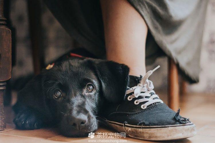 可爱狗狗图片(二)