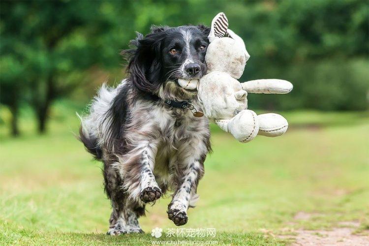 可爱狗狗图片(四)