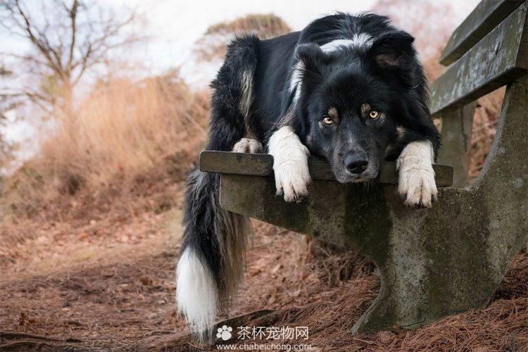 可爱狗狗图片(五)